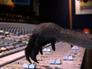 Skippy helping with the mix